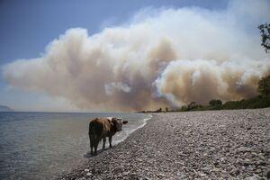 عکس/ گسترش آتش سوزی در ترکیه