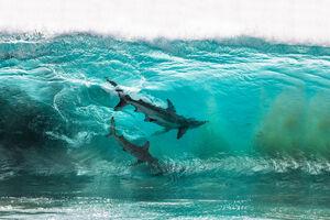 تصاویر دیدنی از دنیای آبزیان