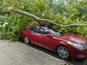 عکس/ طوفانی که درختان آمریکا را از جا کند